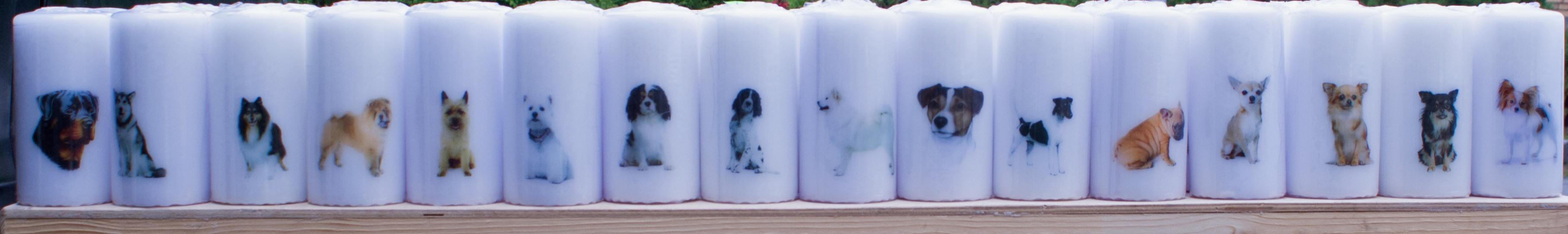 Hunde lys 6 X 12
